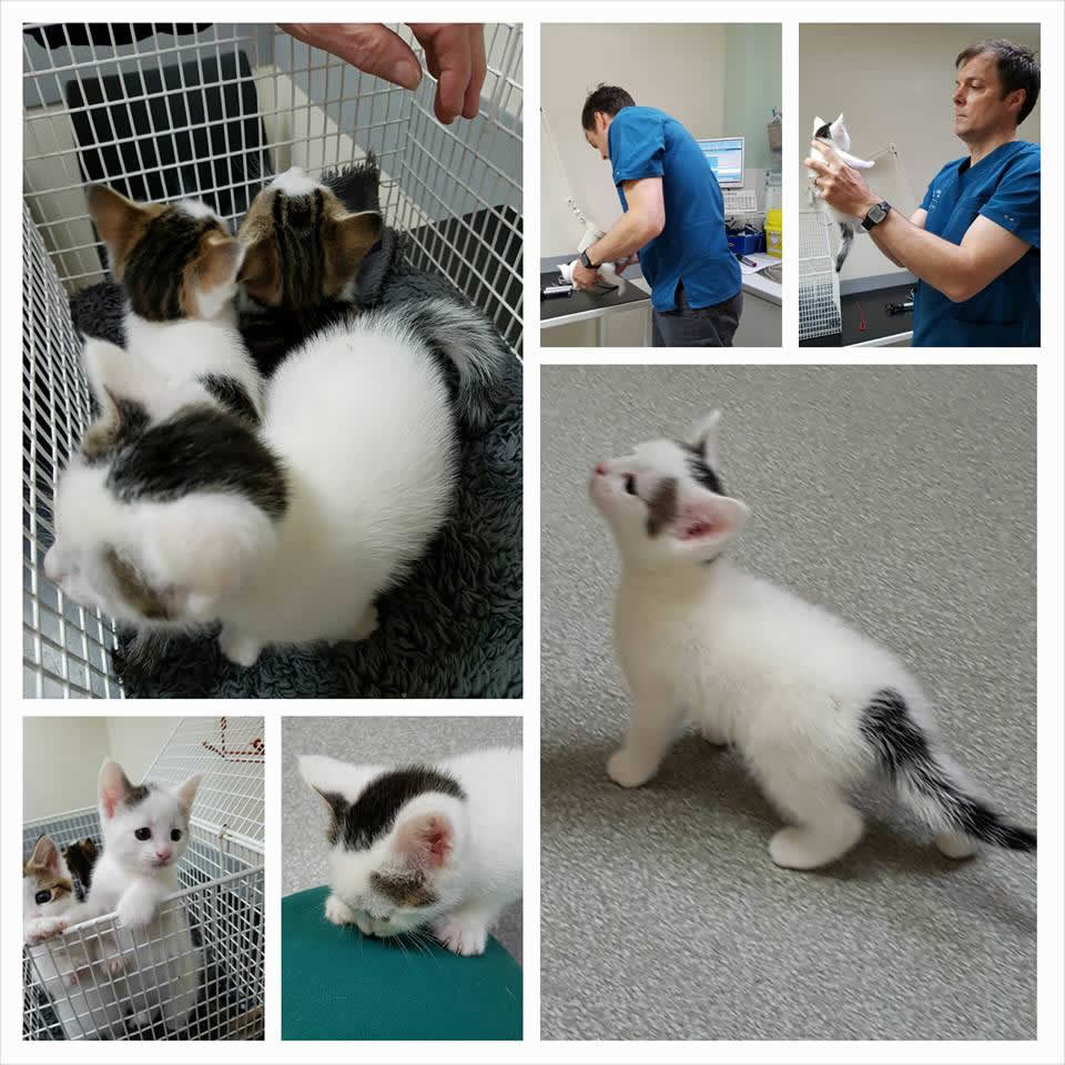 kittens and Jacques Penderis at Vet Extra neurology
