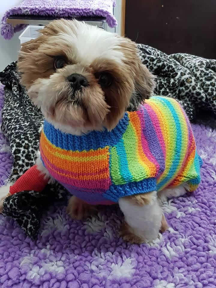 Cubby in his hand knitted jumper