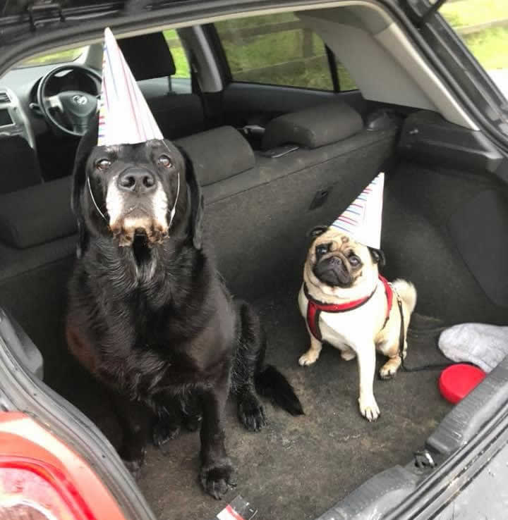 Gog with party hat Vet Neurology Stirling